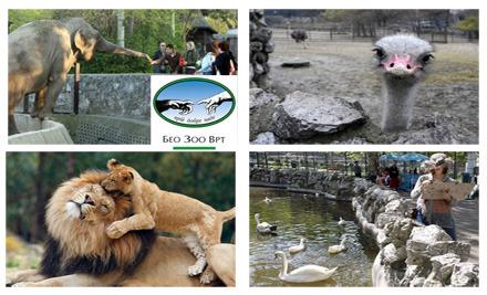 Popust 590 Din Umesto 800 Din Za Dve Ulaznice U Zoo Vrt